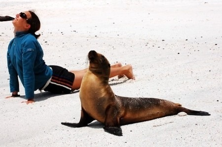 A Seal and a Yogi on the beach